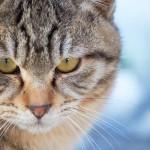 猫が犬から飼い主を救う